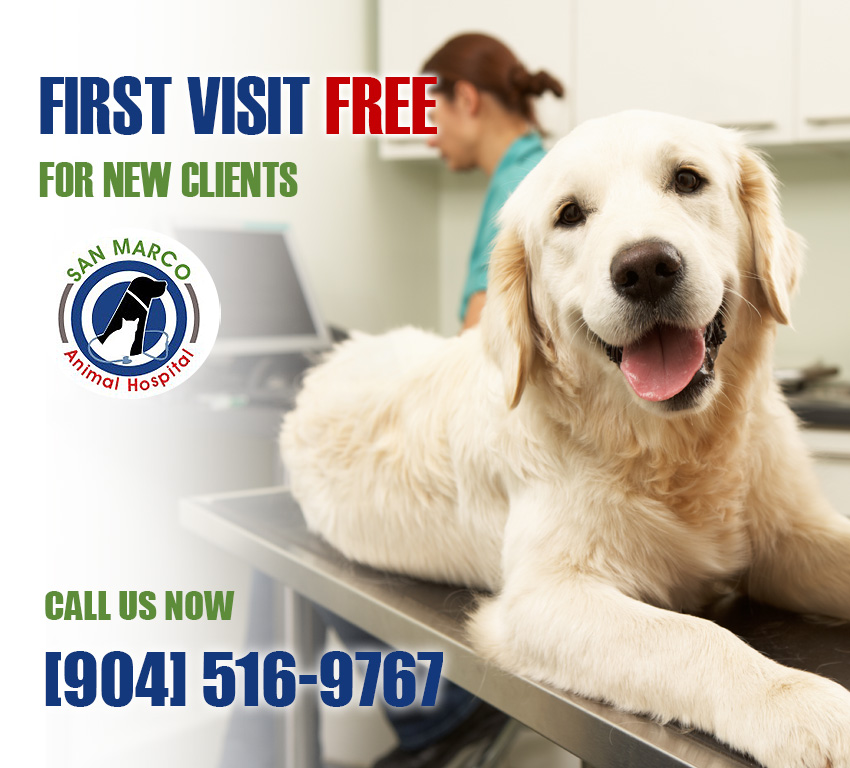 First Visit Promotion at San Marco Animal Hospital