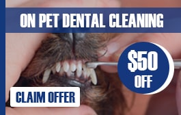 Pet Dental Clean Offer