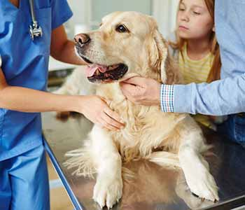 San Marco Animal Hospital helps pet owners plan, and budget, for their pet's wellness