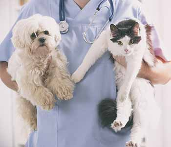 Veterinary Hospital near Jacksonville, FL helps pet parents understand the benefits of pet care services