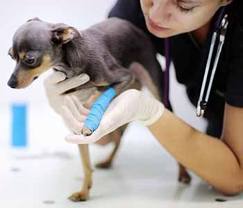 Discover the gentle, quality veterinary services at San Marco Animal Hospital.