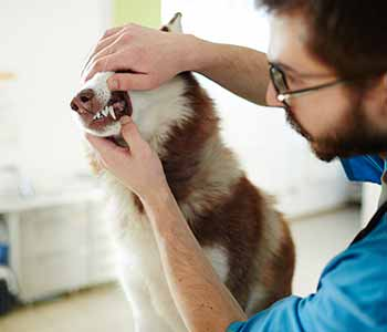 At San Marco Animal Hospital, Dr. Venkat Gutta and his team of professionals are dedicated to providing easily accessible vet care in Jacksonville, FL.