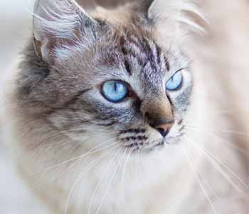 Vet hospital in Jacksonville, FL talks about top procedures available for felines and canines