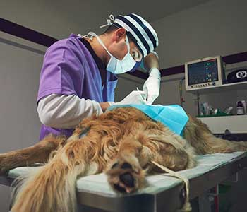 Veterinarian in Springfield, FL area offers emergency vet care