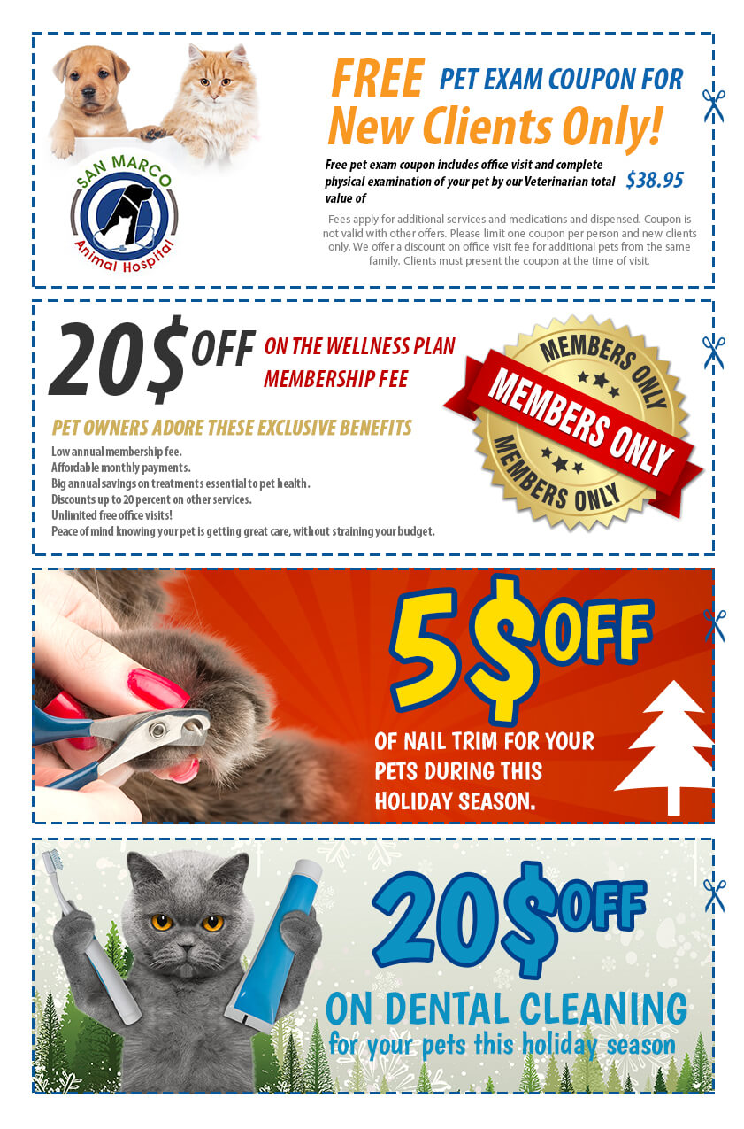 San Marco Animal Hospital this holiday seasonal offers