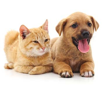 Pet Wellness Plans Near Avondale 32205 area
