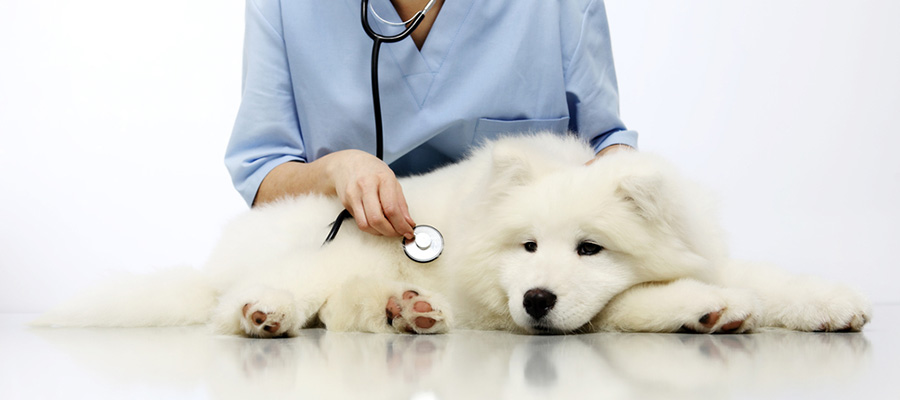 Common triggers that can cause vomiting and/or diarrhea in dogs in jacksonville fl area