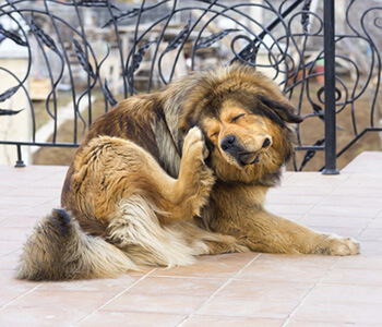 Get Rid of Fleas Riverside 32204 in the Riverside, FL area