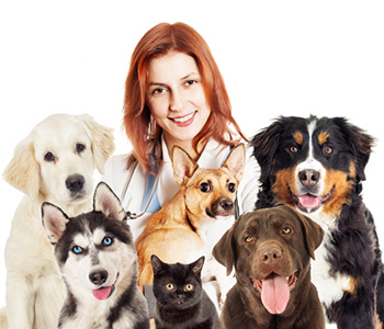 Veterinarian Nearby Jacksonville, Fl area