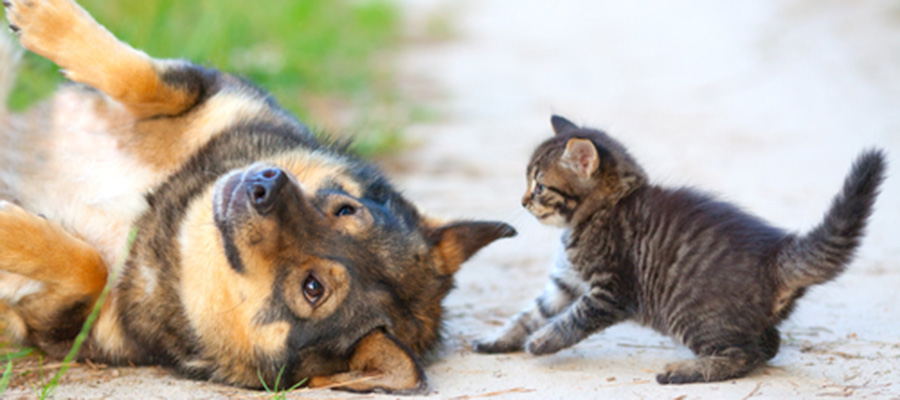 When should you take your pet to see the Veterinarian in Jacksonville, Fl  area