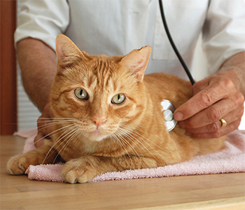 When faced with a pet emergency, don't delay contacting us - Jacksonville, FL