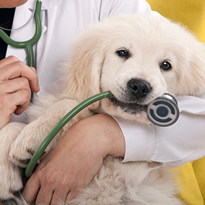 The importance of preventive care for your pet in Jacksonville, FL