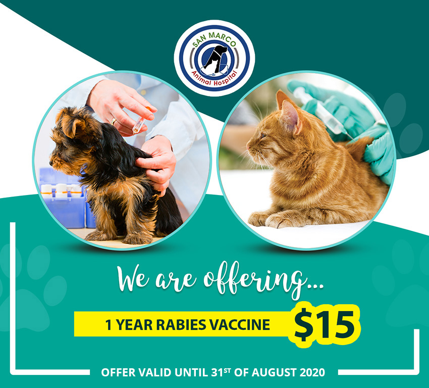 1 year rabies vaccine for $15
