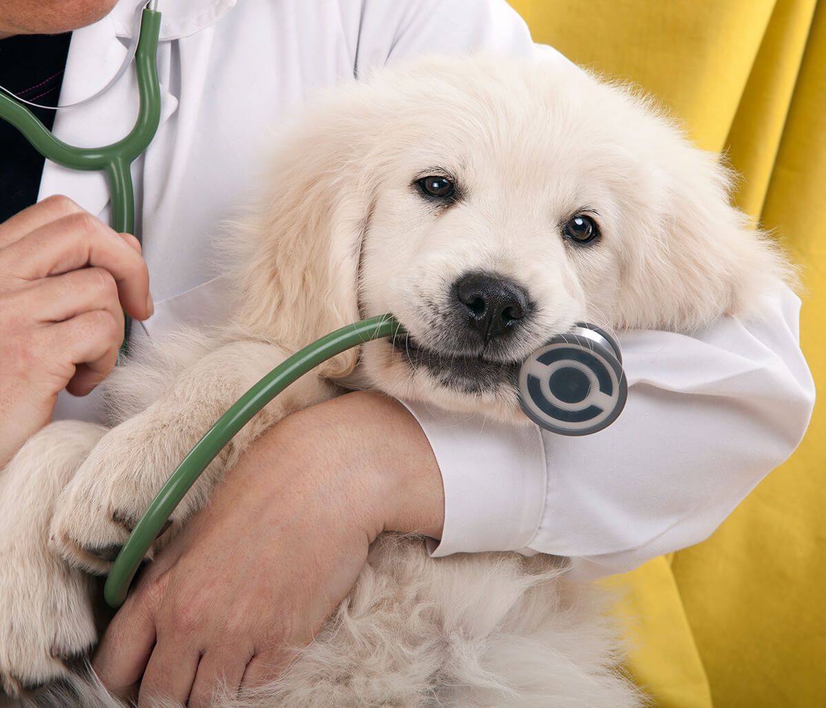 Updates of Covid-19 and Pet Care at San Marco Animal Hospital in Jacksonville FL Area