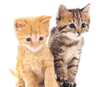 It's Kitten Season—Common Health Concerns in Kittens in Jacksonville FL Area