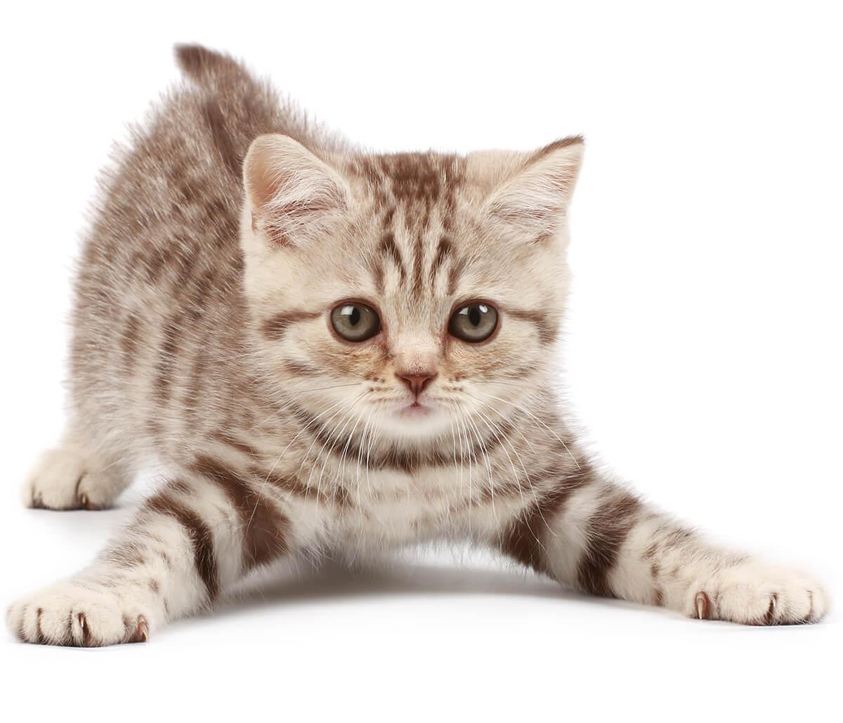 Kitten Health Issues in Jacksonville FL Area
