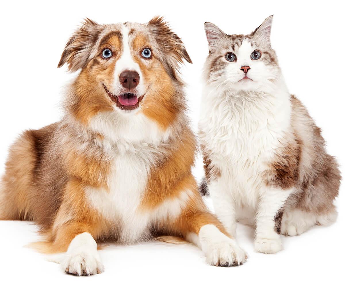 Pet Food Recall at San Marco Animal Hospital in Jacksonville FL Area